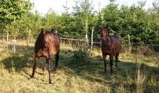 Koně 1